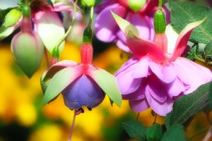 What You Focus on Grows - a Garden Metaphor