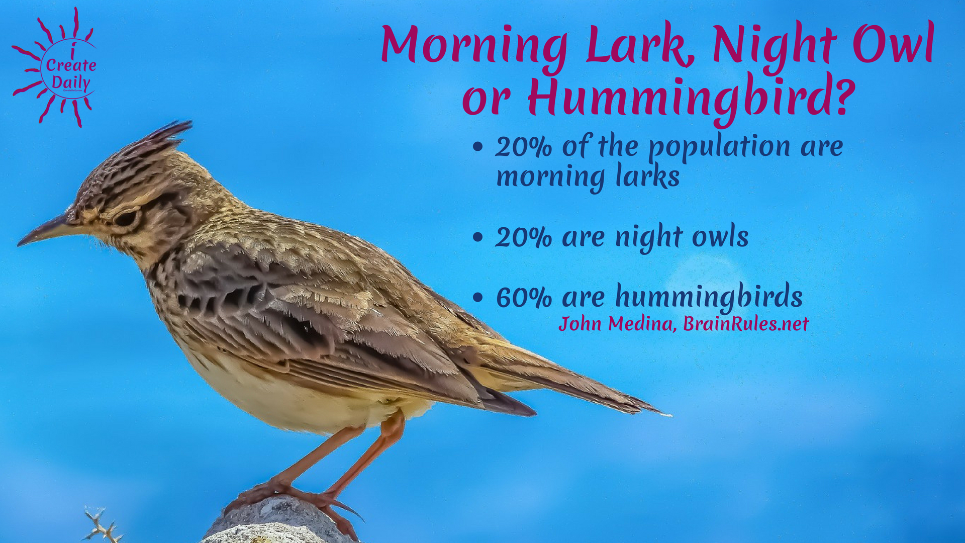 ARE YOU A MORNING PERSON OR NIGHT OWL?Morning Person or Night Owl? 60% of the population are hummingbirds. What?!?  That's a new one! #MorningLark #NightOwl #Hummingbird #MostCreativeTime #GoalSetting #DailyGoals #MorningRoutine #WakeUpEarly
