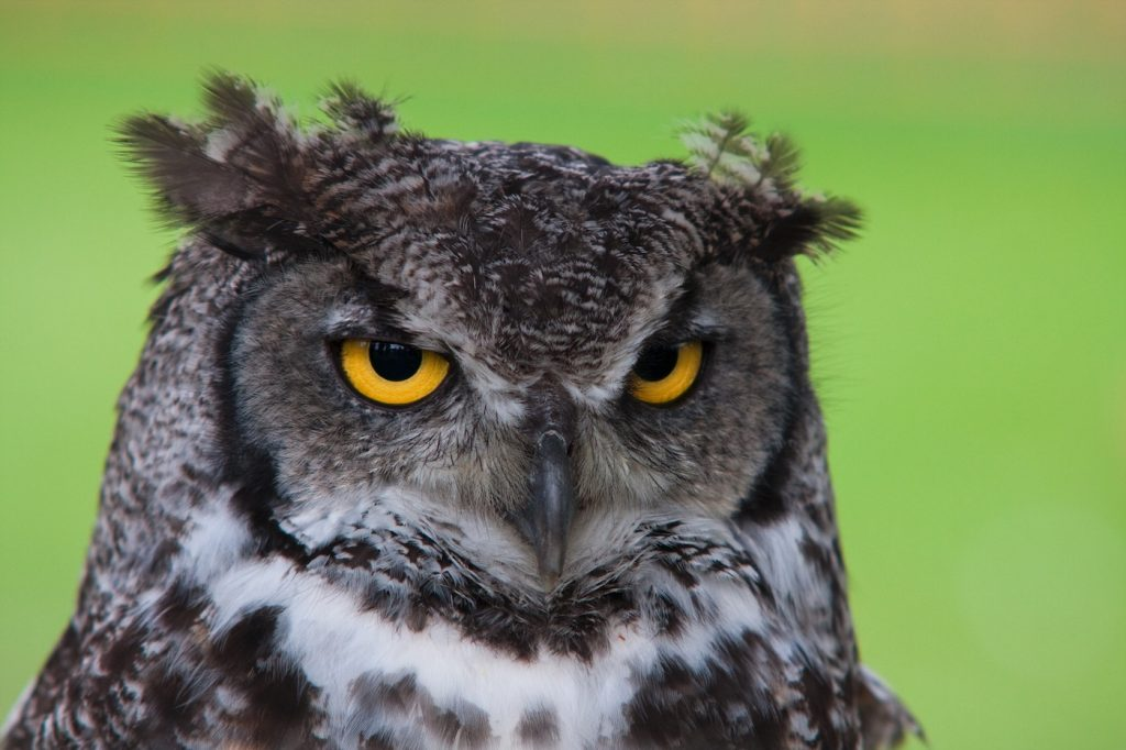 Teen Night Owls Struggle To Learn And >> Morning Lark Night Owl Or Hummingbird Icreatedaily Goals