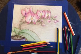 Orchid Pencil Drawing