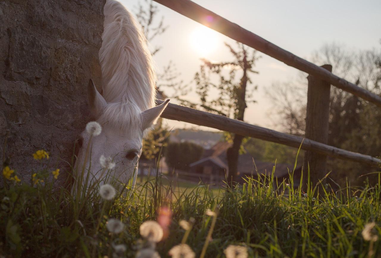 If wishes were horses, beggars would ride. Scottish proverb and nursery rhyme. #IfWishesWereHorses #WishingWontMakeItSo #OldSayings #ScottishNurseryRhyme #HorsesQuotes #DoTheWork