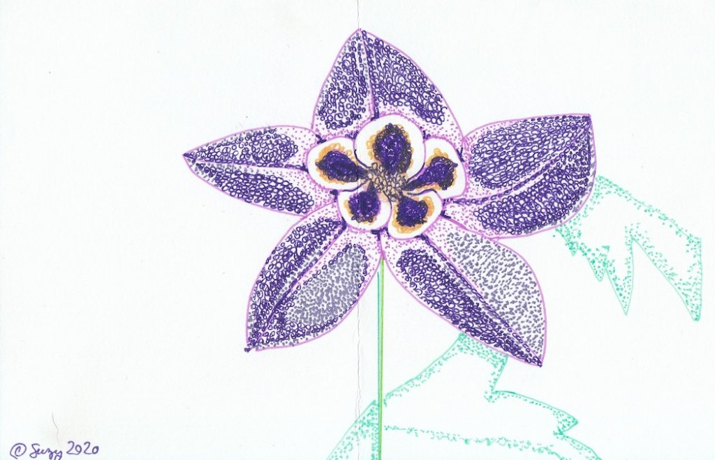 PURPLE FLOWER DRAWINGS - Purple Columbine Flower Drawing in Sharpie on 98 lb paper by Susanna Holman, artist #PurpleFlowers #ArtPrompt #PurpleFlowerDrawings #DigitalPurpleFlowers #SharpieDrawings #SusannaHolman  #iCreateDaily #iArtDaily