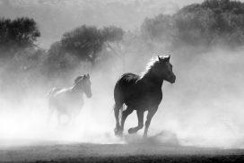 Momentum Quotes - feature image-horses running
