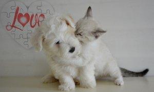 Empaths can feel as others feel. #Empath #Emathic #Puppy #Kitten #PuppyAndKitten