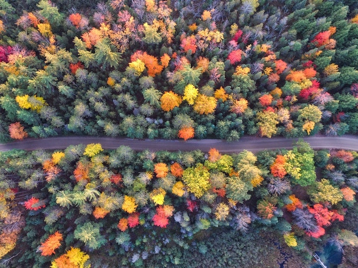 Autumn Forest Trees - beautiful autumn colors from aerial view. #TimberPoem #AutumnTrees #FallColors #ForestInFall #iCreateDaily