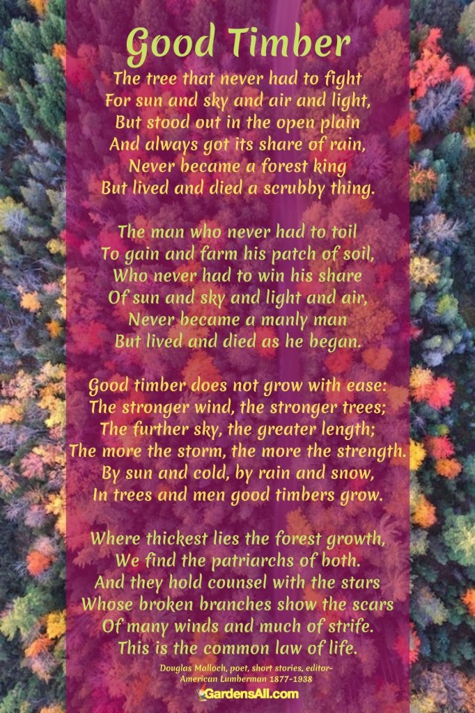 STRUGGLE POEMGood Timber Poem by Douglas Malloch - This is an all time favorite poem that uses the metaphor of trees growing to depict how struggles make us stronger. #GoodTimberPoem #TimberPoem #DouglasMallochPoem #GrowStrongPoem #TreesPoem #iCreateDaily