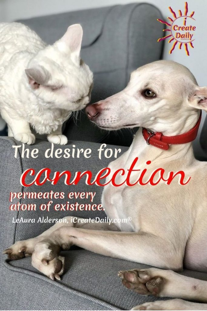 THE DESIRE FOR CONNECTION... permeates every atom of existence. #Connection #Desire #Relationships #Love #Humanity #Dog #Cat #iCreateDaily #SweetAnimalPhoto