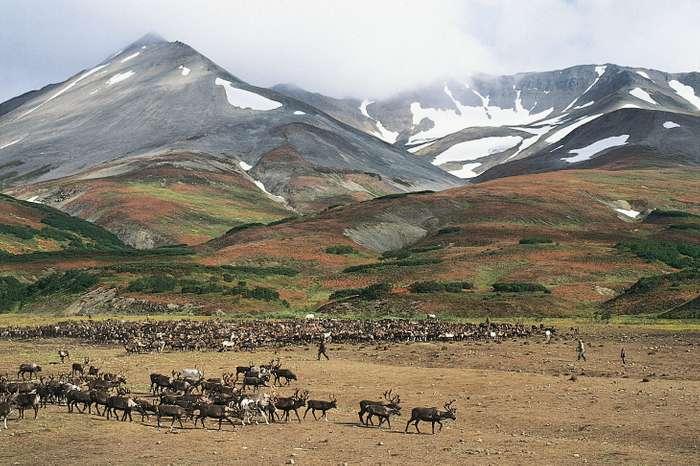Koryak reindeer camp Palana Russia Kamchatka