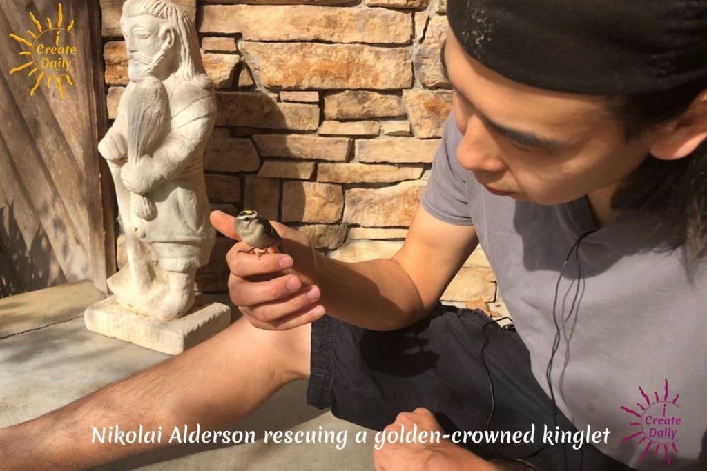 Nikolai-Alderson-rescued-bird-porch
