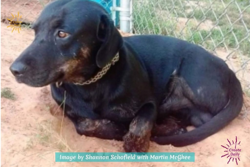 New Book from a Dog's Point of View by Shannon Schofield, author, Busted Flat in Union Springs Martin McGhee, rescue dog story, rescue dog book