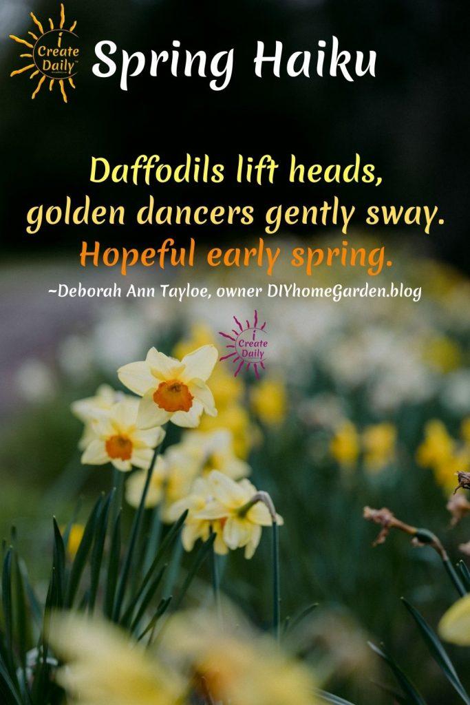 SPRING HAIKU - Daffodils - Daffodil Haiku - Flower haiku - Loving spring! #SpringHaiku #SpringHaiku #HaikuPoem #SpringPoems #Poetry #HaikuPoetry #iCreateDaily #FlowerPoem #FlowerHaiku #DaffodilHaiku