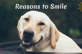100 Reasons to Smile Today and Any Day
